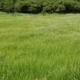 入笠湿原 草の海