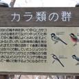 カラ類の鳥