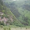 標高が高くてもベンガル湾からの湿度が木を育てる