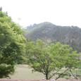 樹正溝の木々は新緑