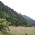樹正溝の湿原