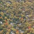 紅葉で埋まる街