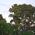 スリランカの森