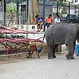 象さんです