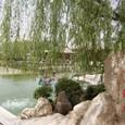 柳の木と龍湖