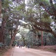 天然記念物 鹿島の杜