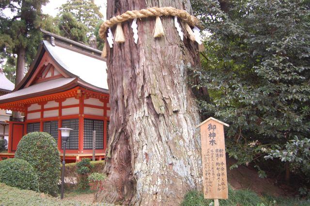 樹齢千余年 御神木