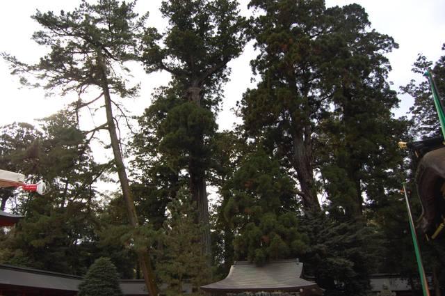 香取神宮の森