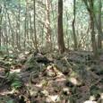 溶岩の上によく森が出来ましたね