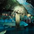 コン・ティキ号と巨大サメ