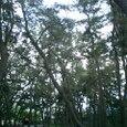 古墳群の森