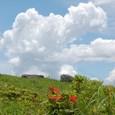 山つつじと夏雲と