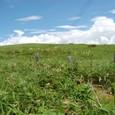 夏草と湧きあがる夏雲