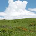 山つつじと湧きあがる入道雲