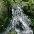 本堂後庭園 滝