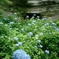 紫陽花と洞窟墳墓