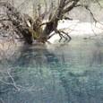 巨木と石灰棚