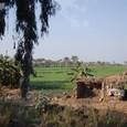 メンフィスの農家の畑