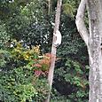 山崎神社の杜に木登り猫