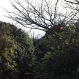 笹の森 滑り台のような道