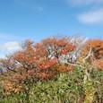 笹の森と紅葉が混じる