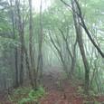 落ち葉の絨毯の道 豊かな森だ