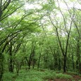 新緑の森に吸い込まれる