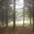 薄くらい木立の道