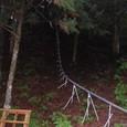 樹を切り出すレール