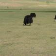 Mongolia_tour_2007_040