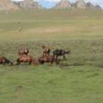 Mongolia_tour_2007_041
