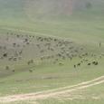 Mongolia_tour_2007_202