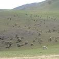 Mongolia_tour_2007_203