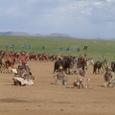 Mongolia_tour_2007_251