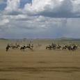 Mongolia_tour_2007_377