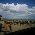 Mongolia_tour_2007_388