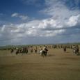 Mongolia_tour_2007_389