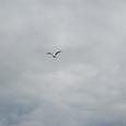 カモメが飛ぶモルダウ川