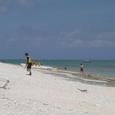 サンゴ礁 白浜海岸