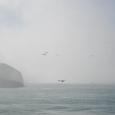 カナダ滝の霧とカモメ