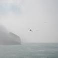 霧と飛翔するカモメ