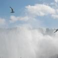 カモメが舞うアメリカ滝