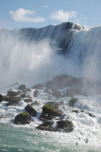 カモメとアメリカ滝