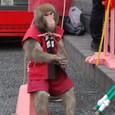 猿さんの出番