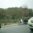 桃の花を運ぶバイク