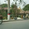 道路脇で正月の鉢植え花を売る