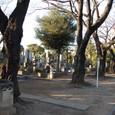 霊園桜並木