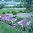 空港近くの民家 芝桜