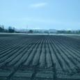 広大な畑と大雪
