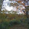 ぶなの森は紅葉の真っ盛り